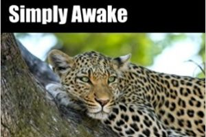 Simply Awake: Spiritual Enlightenment, the Simplest Thing